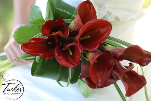 Red Callah bouquet